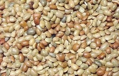 kulthi beneficial in kidney stone